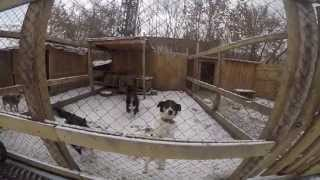 Городской приют для бездомных животных, Новосибирск