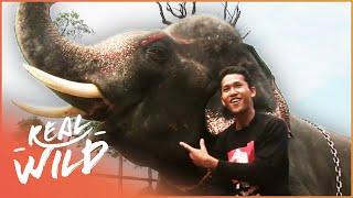 The Last Mahout: The Final Elephant Whisperer (Wildlife Documentary) | Real Wild