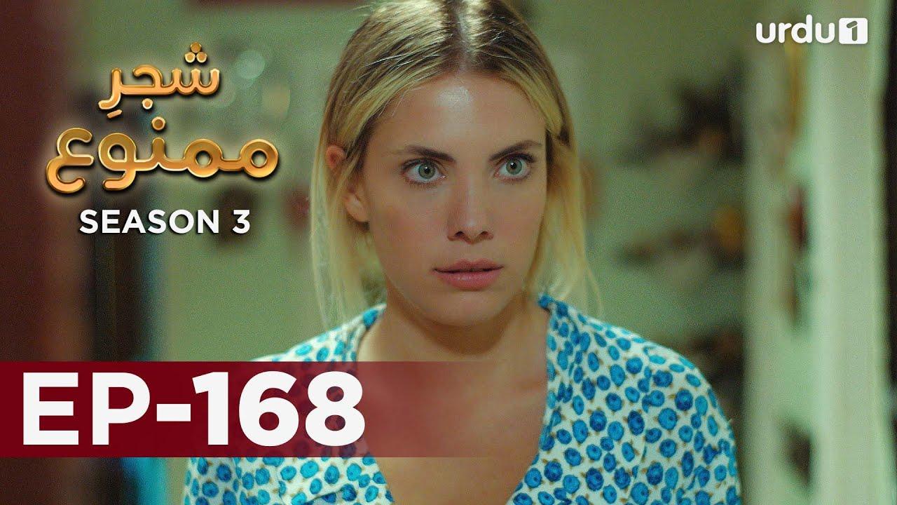 Shajar-e-Mamnu   Episode 168   Turkish Drama    Forbidden Fruit   Urdu Dubbing   02 August 2021