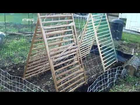 Planting Cucumbers in Any Size Garden  - The Wisconsin Vegetable Gardener Extra 52