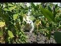 Turkish Angora cat enjoys sunny weather outdoors