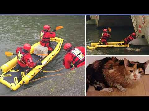 Rescuers in a raft save cat that fell off bridge and into river