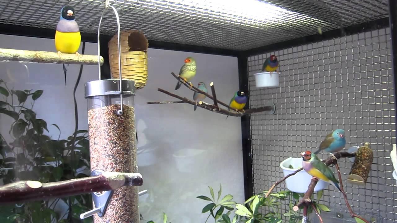 Indoor Finch Aviary 2010 YouTube