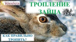 Тропление зайца! ПРАКТИЧЕСКИЙ урок - Videoohota