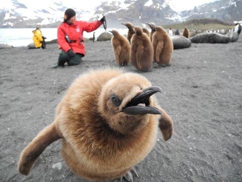 Antarctica, Falklands, and South Georgia