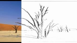 Auto Draw 2: Dead Vlei, Sossuvlei National Park Namibia, Africa