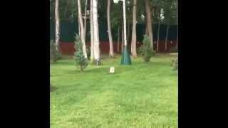 Андрей Черкасов дрессирует свою собаку Моню Дом 2