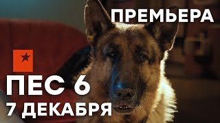 🔥 Сериал ПЕС 6 сезон - ПРЕМЬЕРА - НОВИНКА 2020 - 7 декабря | СЕРИАЛЫ ICTV