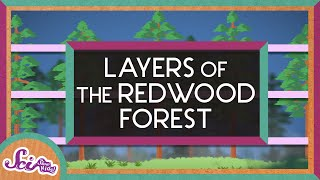 From the Ground to the Sky: The Layers of the Redwood Forest