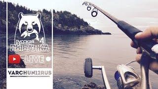 Русская рыбалка 4 Спиннинг Карповая Ловля Ловля Сома В Поиске Белуги