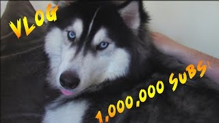 Little Lizard & Tiny Turtle Vlog - 1 MILLION SUBSCIRBERS + HARLEY UPDATE