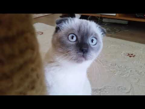Spaghetti western cat video made in Istanbul