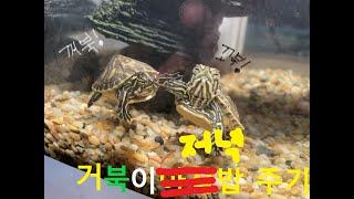 거북이 키우기 17탄