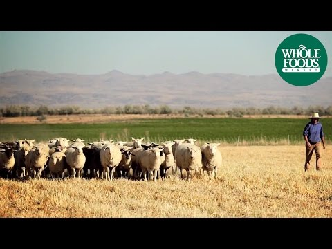 Blue Sage Farms - Grass-Fed Lamb & Sheep Cheese | Producer Profiles | Whole Foods Market