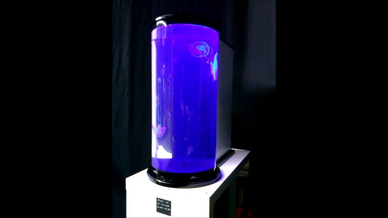 aquarium pour m duses biome cr ation cylindre 30 youtube. Black Bedroom Furniture Sets. Home Design Ideas