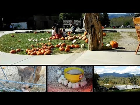 Weekend Vlog - Sunday Stroll to Fall Festival!!