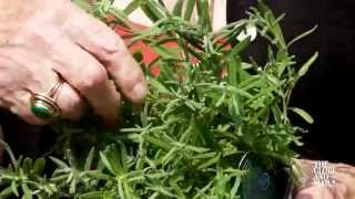 Gardening Basics: Top tips for growing all kinds of herbs