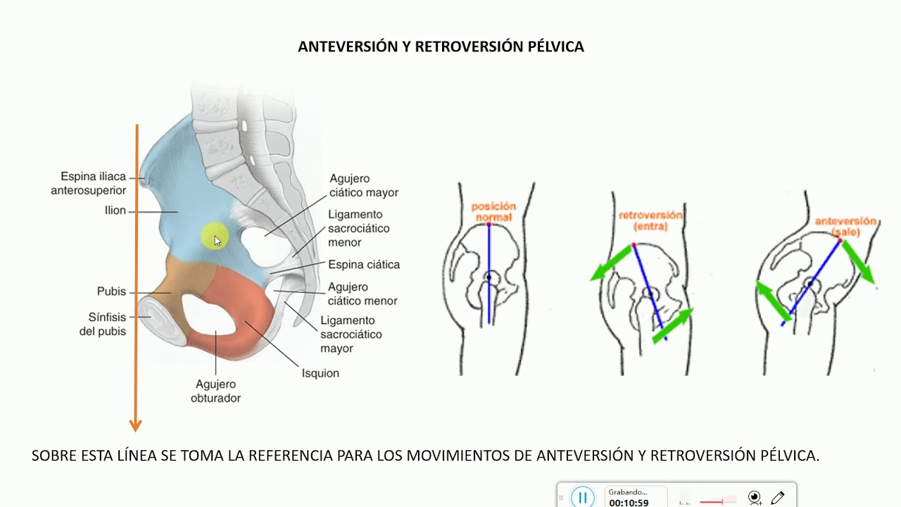 Anatomía articular del complejo de pelvis y cadera - YouTube