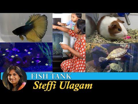 Fish Tank Setup In Tamil | Aquarium Setup In Tamil | Pet Store Tour In Tamil