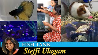 Fish Tank setup in Tamil | Aqu…