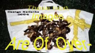 free eco friendly organic slug snail traps