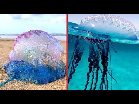 MOST DANGEROUS OCEAN CREATURES IN THE WORLD