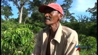 ¿Por qué decayó la producción cafetalera en Cuba?