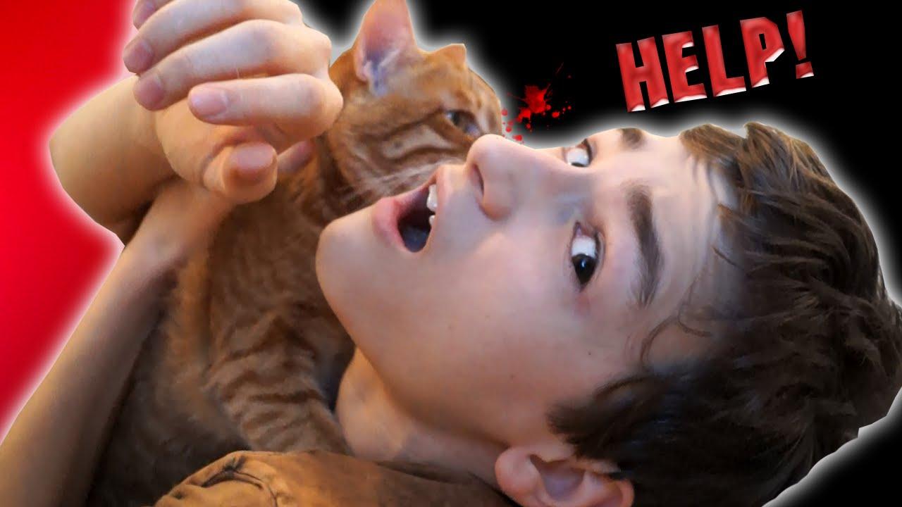 Видео с мой кот пытается меня убить