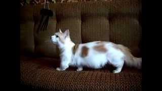Манчкин. Короткие кошачьи истории - Часть 1