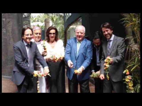 Tres crías de león de Angola llegan al zoológico de Tenerife