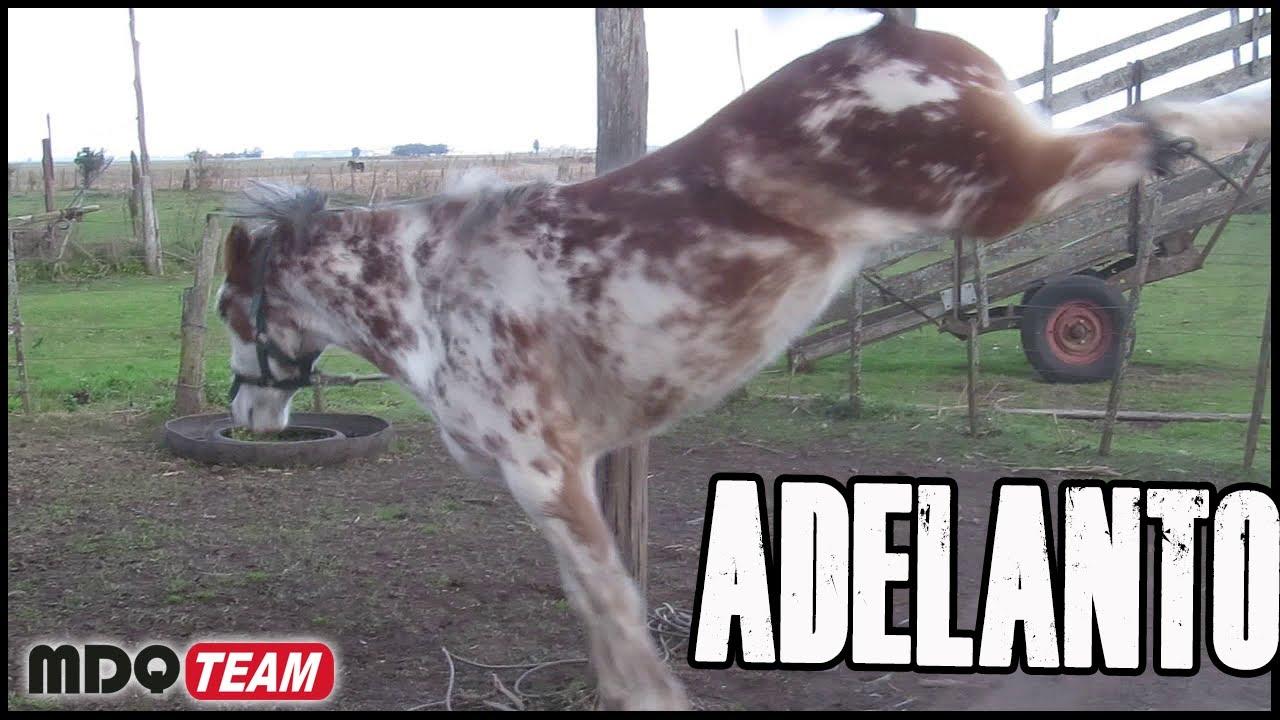 ADELANTO DEL DOMINGO - SE VIENE DOMA