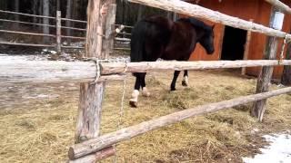 Как можно назвать коня