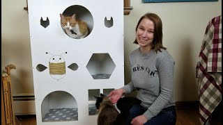 Cutest cat house made from repurposed book shelf!