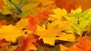 Autumn! Nature! Forest! October! Beauty! Осень! Природа! Лес! Октябрь! Красота!