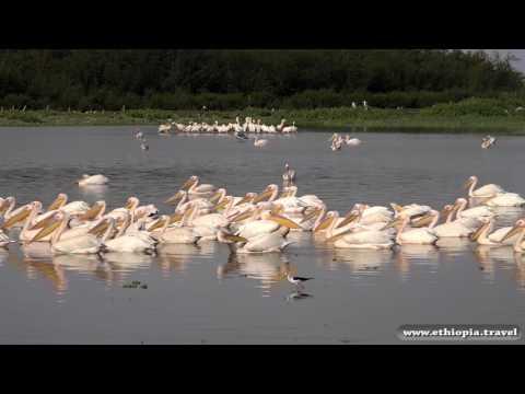 Ethiopia - Birds Island on lake ziwaw (Part 3)