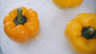 Slow motion close top shot of multiple yellow capsicum falling in water