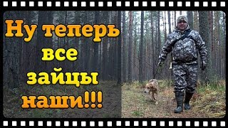 Охота на зайца с русской гончей или как я стал гончатником.
