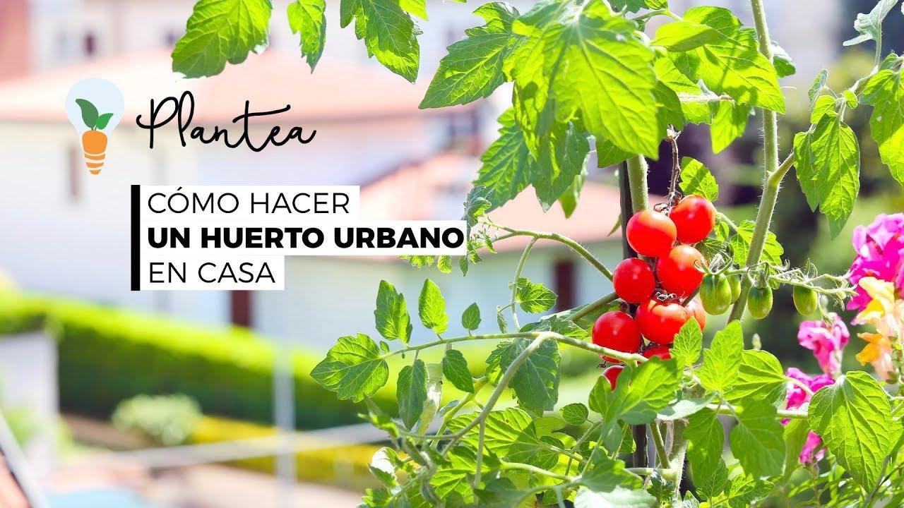 Cómo Hacer Un Huerto Urbano En Casa Guía Descargable