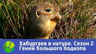 Маленький гений большого подкопа  Хабургаев в натуре  Сезон 2 | Живая Планета