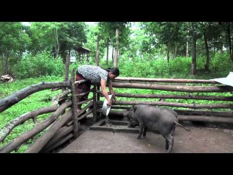 Reaching the Unreached: Savings Groups in Rural Vietnam on YouTube