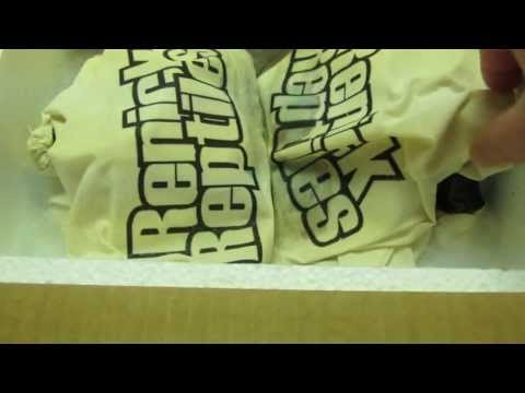 Unboxing from Renick Reptiles