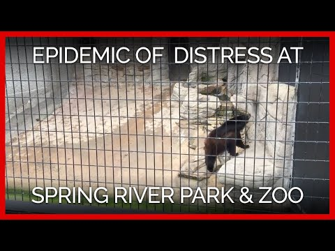 Epidemic of Psychological Distress at Spring River Park & Zoo