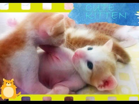 The Newborn Super Cute Kittens - Must Watch for Cat Lover
