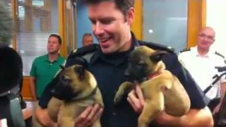 Winnipeg Police Puppies