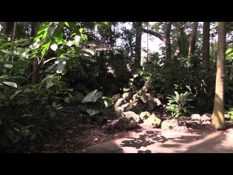Fairchild Tropical Botanic Gardens in HD- montage 2013