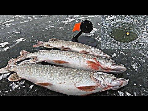 ЭТО МЕСТО НОНСЕНС - ДУПЛЕТ НА ЖЕРЛИЦУ!!! ПЕРВЫЙ РАЗ ВИЖУ ТАКОЕ!!! Зимняя рыбалка.