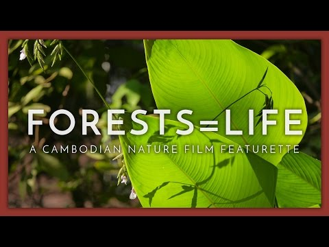 A Cambodian Nature Film - Forests = Life