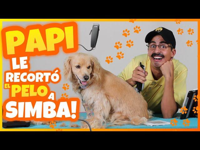 Daniel El Travieso - PAPI RECORTÓ A SIMBA!