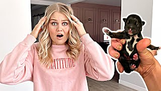 WE DID NOT EXPECT THIS! *New Puppy??*