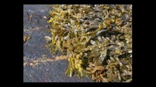 Какие дикорастущие травы можно использовать в питании?